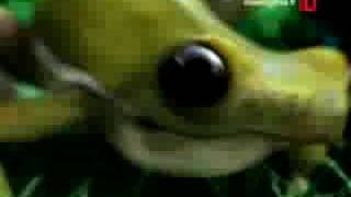 """MINI BN"" COOKIES Commercial - Frog"