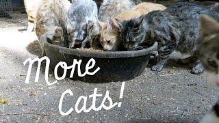 I Have More Cats? thumbnail