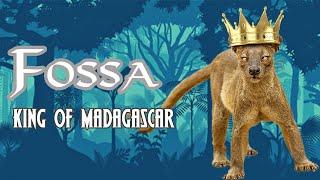 Cầy Fossa - Vị vua của thế giới động vật ở Madagascar