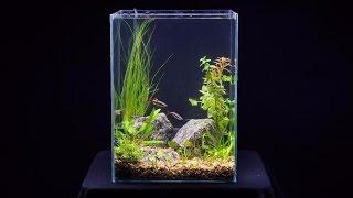 Простой аквариум. Запуск и оформление аквариума 13 литров (качество 4К) start aquarium