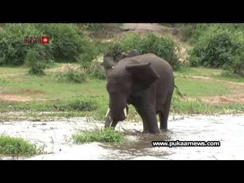 Uganda Wildlife Attracting a Growing Number of Tourists
