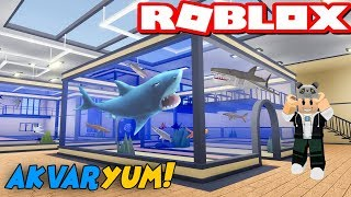 We're Building a Wild Fish Aquarium!! - Roblox Sea Life Tycoon with Panda