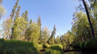 СПЛАВ по таёжной реке за золотом Карелии