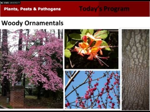 2015-03-24 Plants Pests Pathogens Woody Ornamentals
