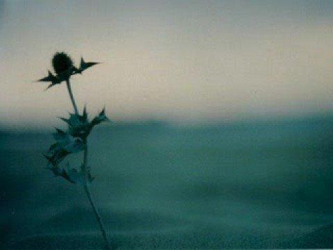 Liz Meyer - Without You (Nuked RMX)