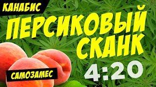 TPA Mary Jane! Peach Skunk — Персиковый Сканк / vape канабис