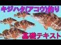 【キジハタ(アコウ)釣り】仕掛け・釣り方 【基礎テキスト編】