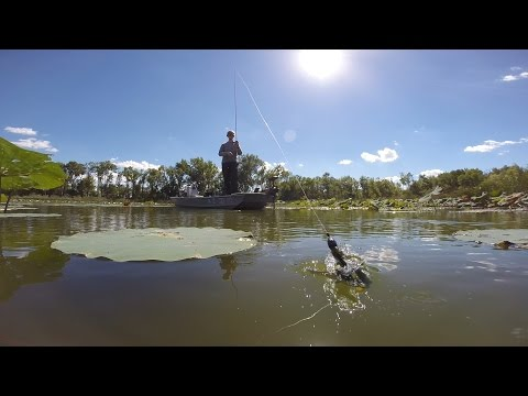 Late Summer Bass Fishing!