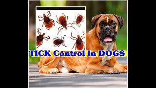 Tick control and Tick Fever in Dogs