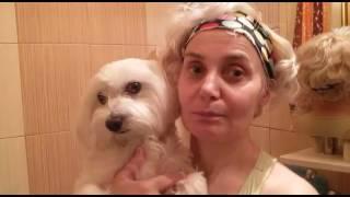 Как подстричь собаку без машинки