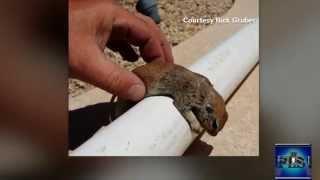 Pool Repairman saves squirrel by preforming CPR In HD (Viral Video)