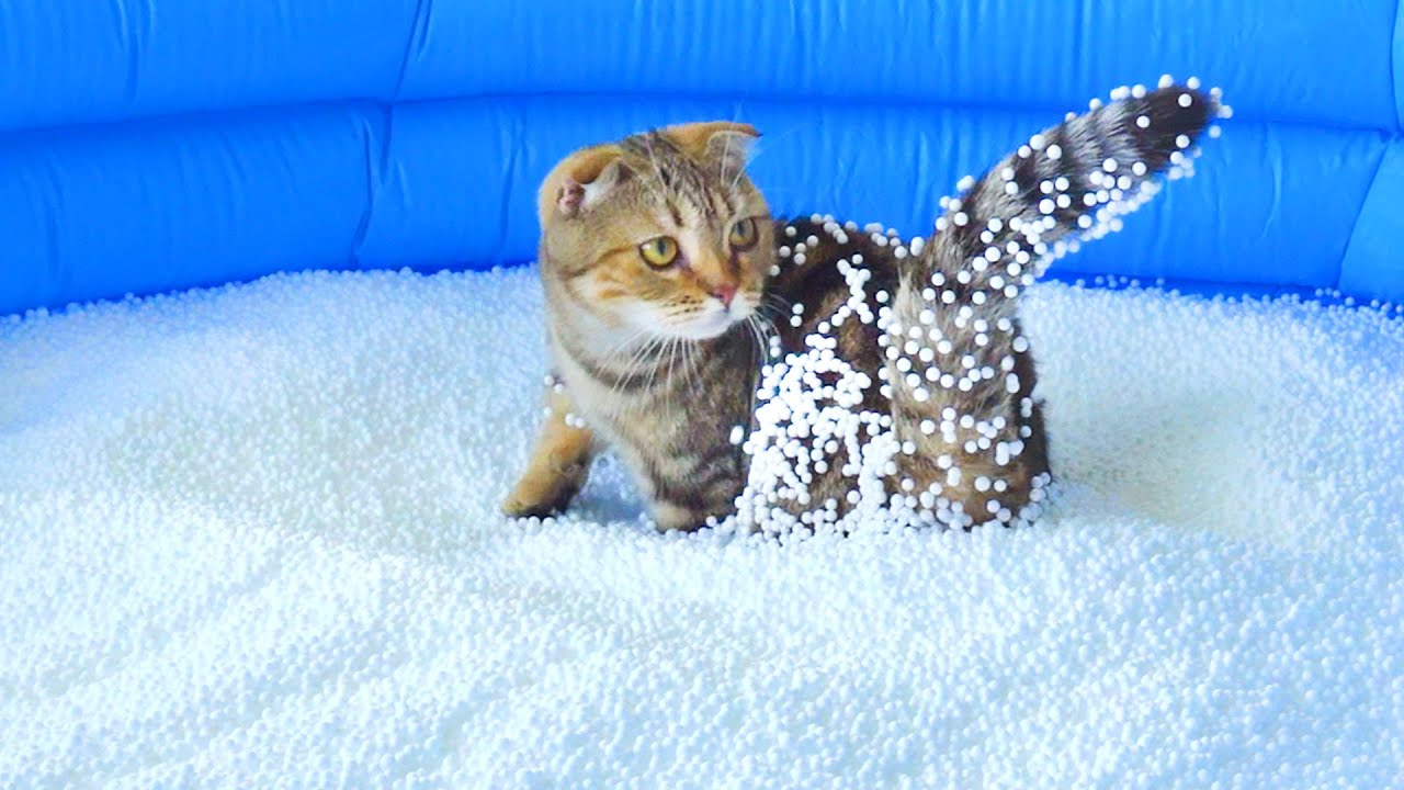 Can Cats Walk On Bean Bag Fillings?