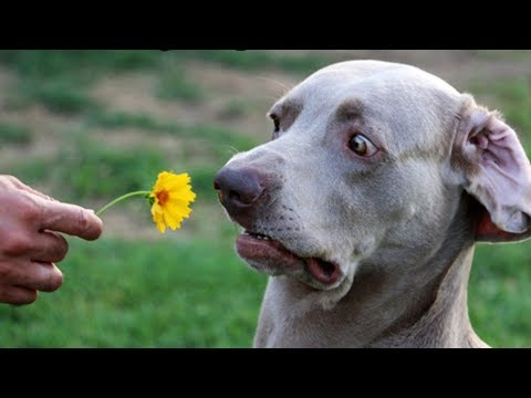 Cute is Not Enough - Funny Cats and Dogs Compilation #241