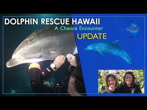 Dolphin Rescue Hawaii - Update: A Chance Encounter