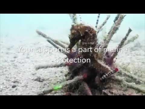Help Us To Protect Cambodia's Marine Life