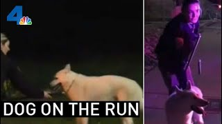 CHP Officers Rescue Husky on a 'Ruff' Night | NBCLA