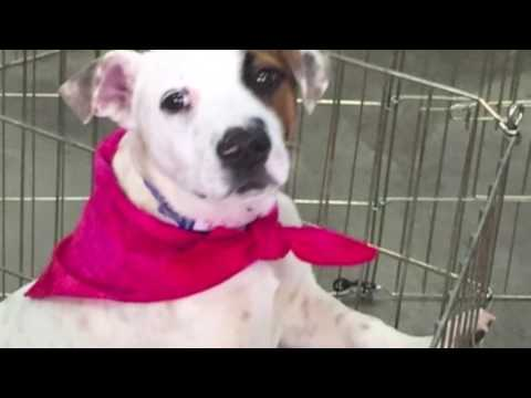 Colorado Puppy Rescue Youtube