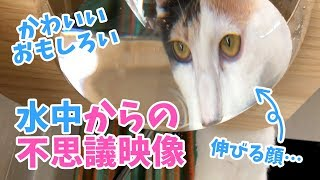 水を飲む猫を下から撮ってみたら不思議な光景が…!
