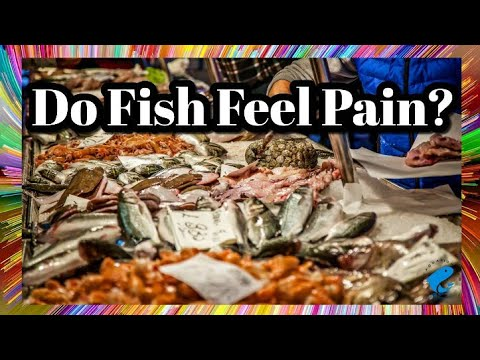 Do Fish Feel Pain ?