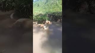 Ванная для собаки