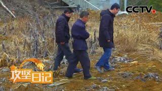 《攻坚日记》 20200508 大别山下有新春|CCTV农业