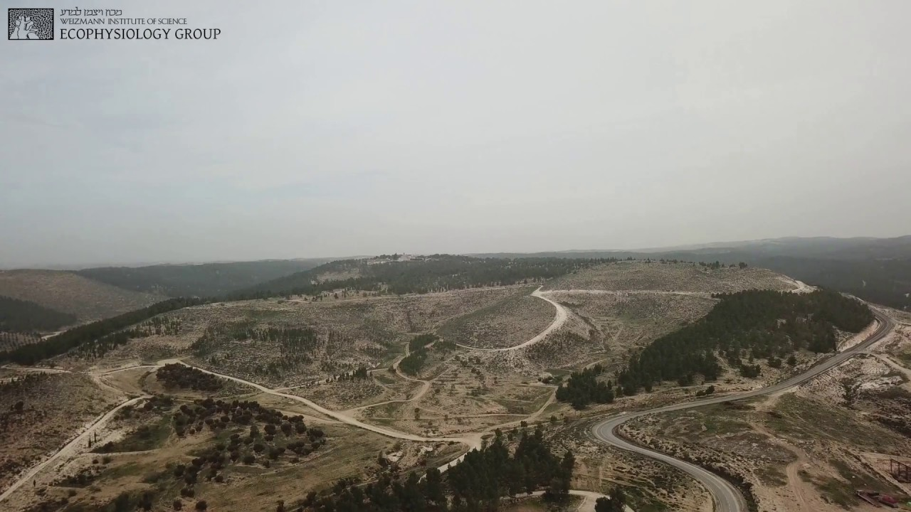 Download Introduction to Yatir forest, on the edge of the Negev desert