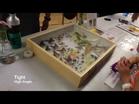 A2 - Sights and Sounds of the Arizona Insect Festival