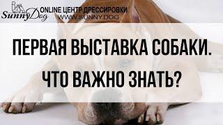 Первая выставка собаки. Что важно знать?