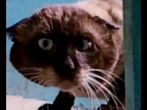 Фото безумных котов