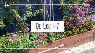DE Log #7 [학교, 버거킹, 짧은 하루]