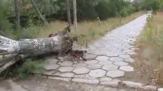 Ураган в Крыму(24.09.2014 Последствия урагана в Приморском (Феодосия) Смотрите мои видео по темам: Unboxing: https://www.youtube.com/playlist?list=PLCNv..., 2014-09-24T20:39:22.000Z)