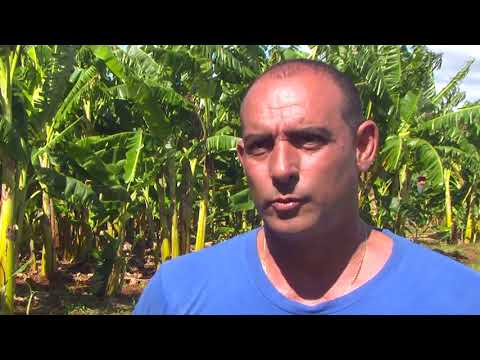 Video de Melena del Sur