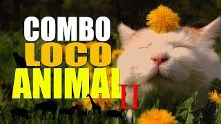 COMBO LOCO ANIMAL 2