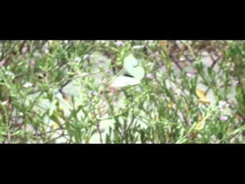 Kangaroo Island - Let yourself go