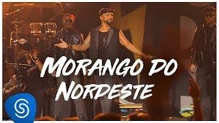Baixar Alexandre Pires - Morango do Nordeste (O Baile do Nêgo Véio - Ao Vivo Em Jurerê) [Clipe Oficial]