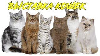 Выставка Кошек ● Котики Разных Пород