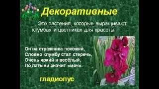 Культурные растения.AVI