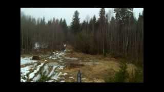 Охота на медведя на приваде видео