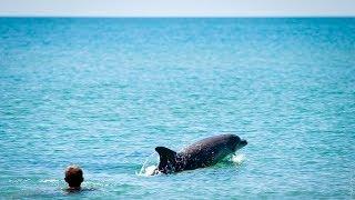 Плаваем с тремя дельфинами. Море. Коса. Витязево.