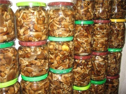 Как мариновать грибы опята рецепт
