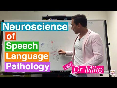 Download Neuroscience of Speech Language Pathology (SLP)