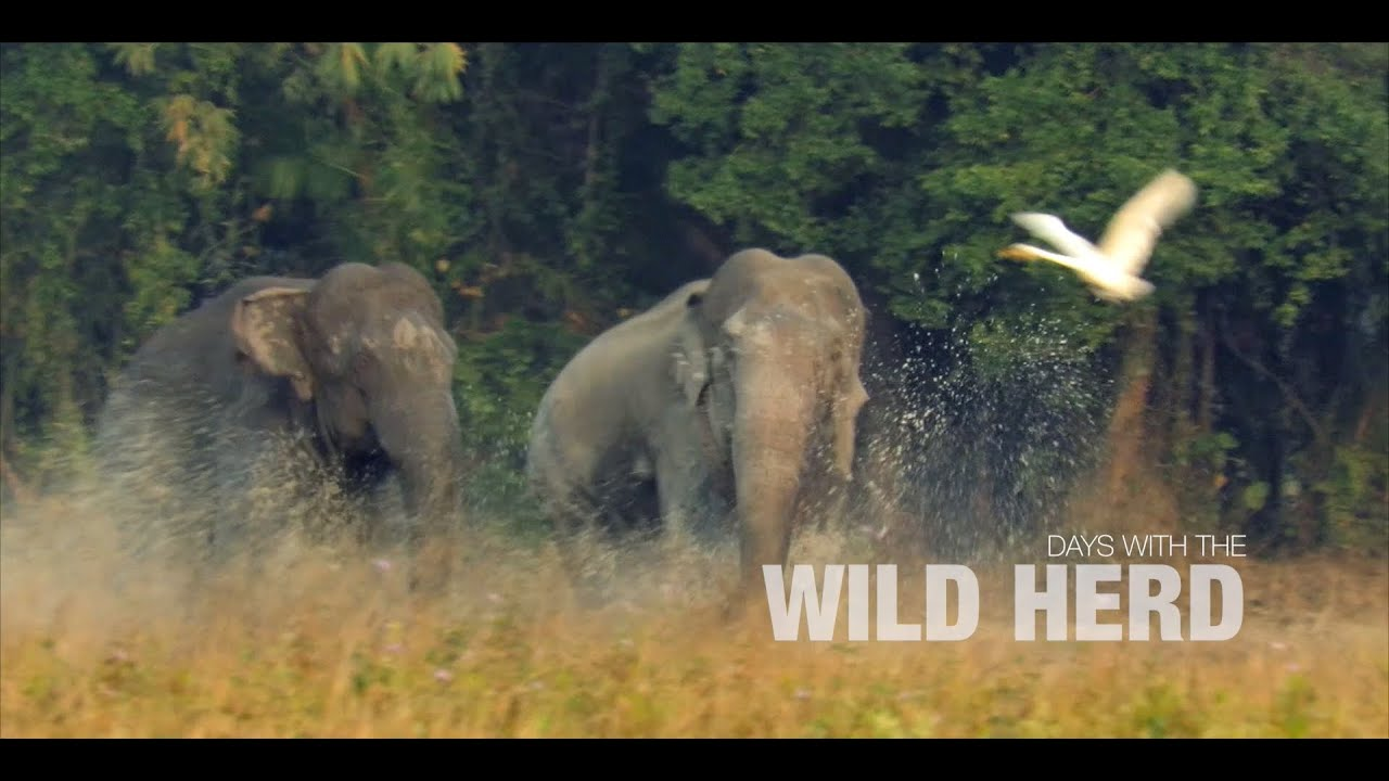 """Trailer of """"Days with the wild herd"""""""