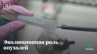 Эволюционная роль опухолей Андрей Козлов