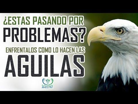 Las mejores reflexiones cristianas - Enfrenta tus problemas como un águila