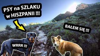 Zaatakowały mnie DWA PSY w Górach !!! - Musiałem się WYCOFAĆ - NIE Zdobyłem SZCZYTU !!! (Vlog #376)