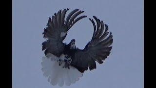 Серпатик учится летать.