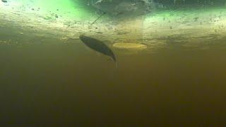 Непростая рыбалка с ночёвкой на Иваньковском водохранилище