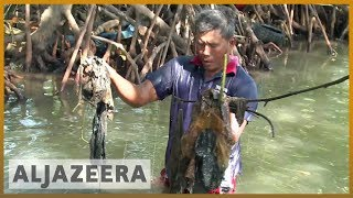 Indonesian plastic waste pollution threatens fish stocks