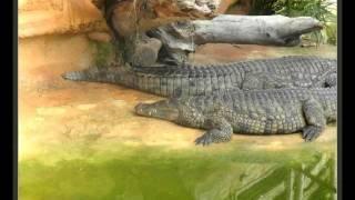 La ferme aux  Crocodiles -  N 1 -