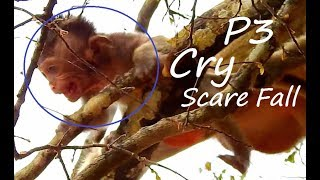 P3 Heart Breaking Pity Gino Cry Scare Fall ! Why Mom Bertha Not Help Baby Like This?